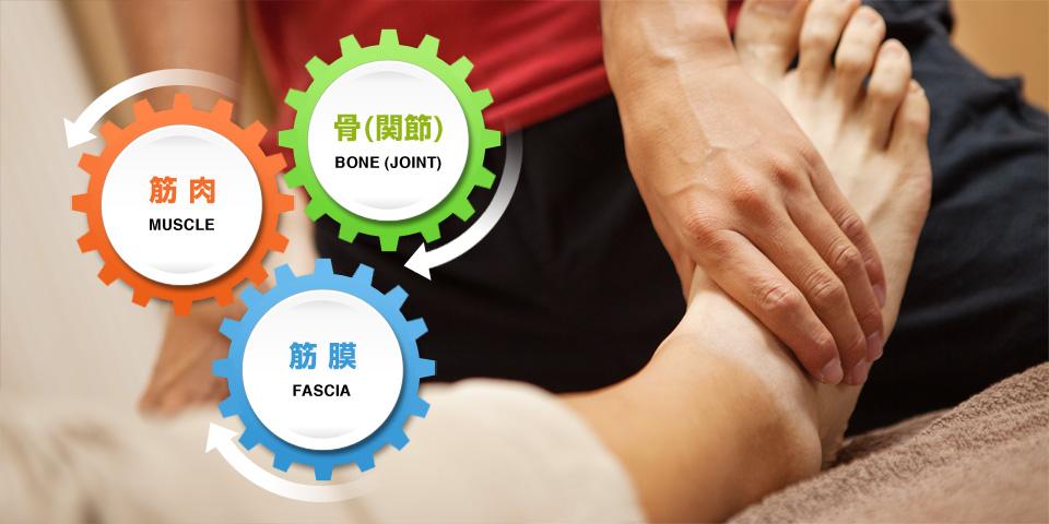 骨(関節)×筋肉×筋膜の制限をストレッチで解放